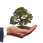 How Small Businesses Can Save the Environment