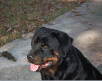 E. C. Rottweilers.png