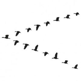 Aves migrando