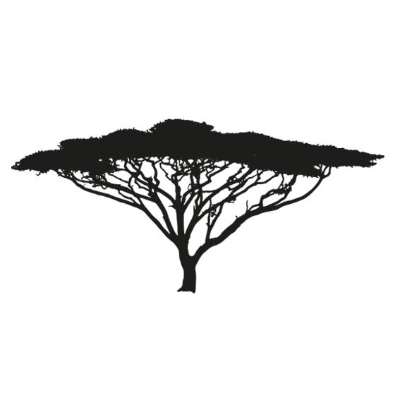 acacia_africana
