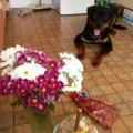 Baryk-1-narozeniny