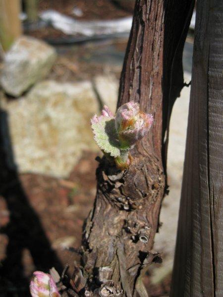 20110422 Wein 003