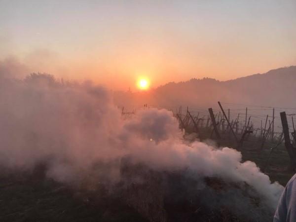 Kampf gegen Frost - brennende Strohballen räuchern Weingärten