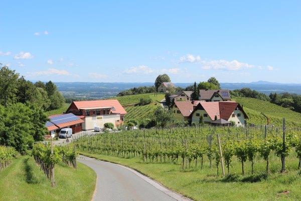 Südsteiermark_Wein.5