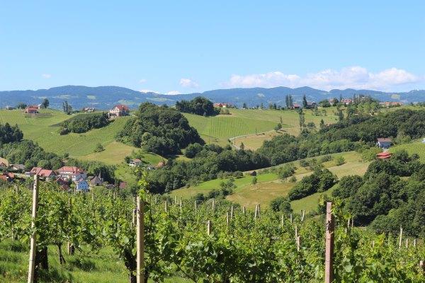 Südsteiermark_Wein.6
