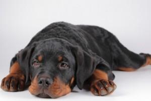 Photo d'un petit chien