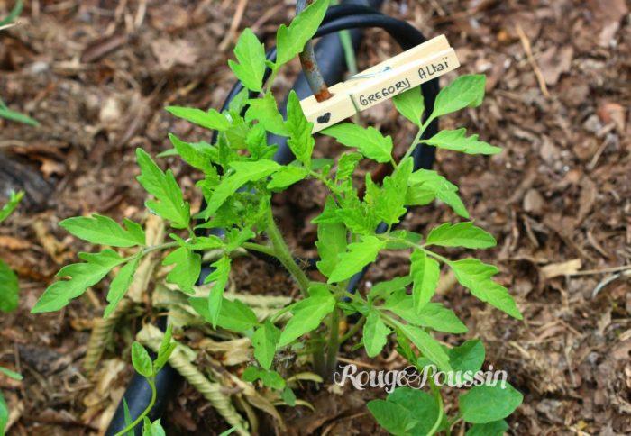 Pince à linge pour servir d'étiquettes de jardin