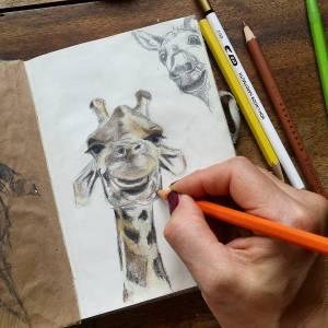Croquis d'une girafe et d'un âne