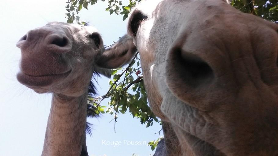 Photo d'âne prise de près