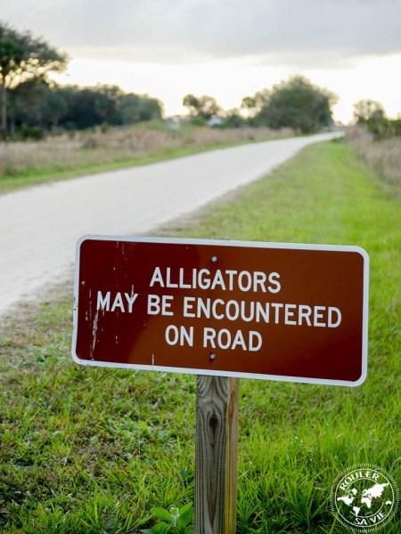 kissimme alligator 1024x1024