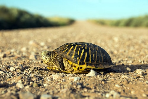Man injured trying to rescue turtle on Route 66