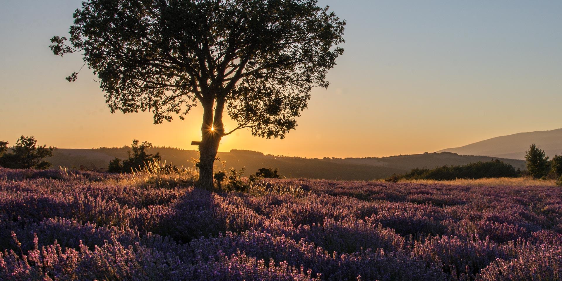 coucher de soleil lavande