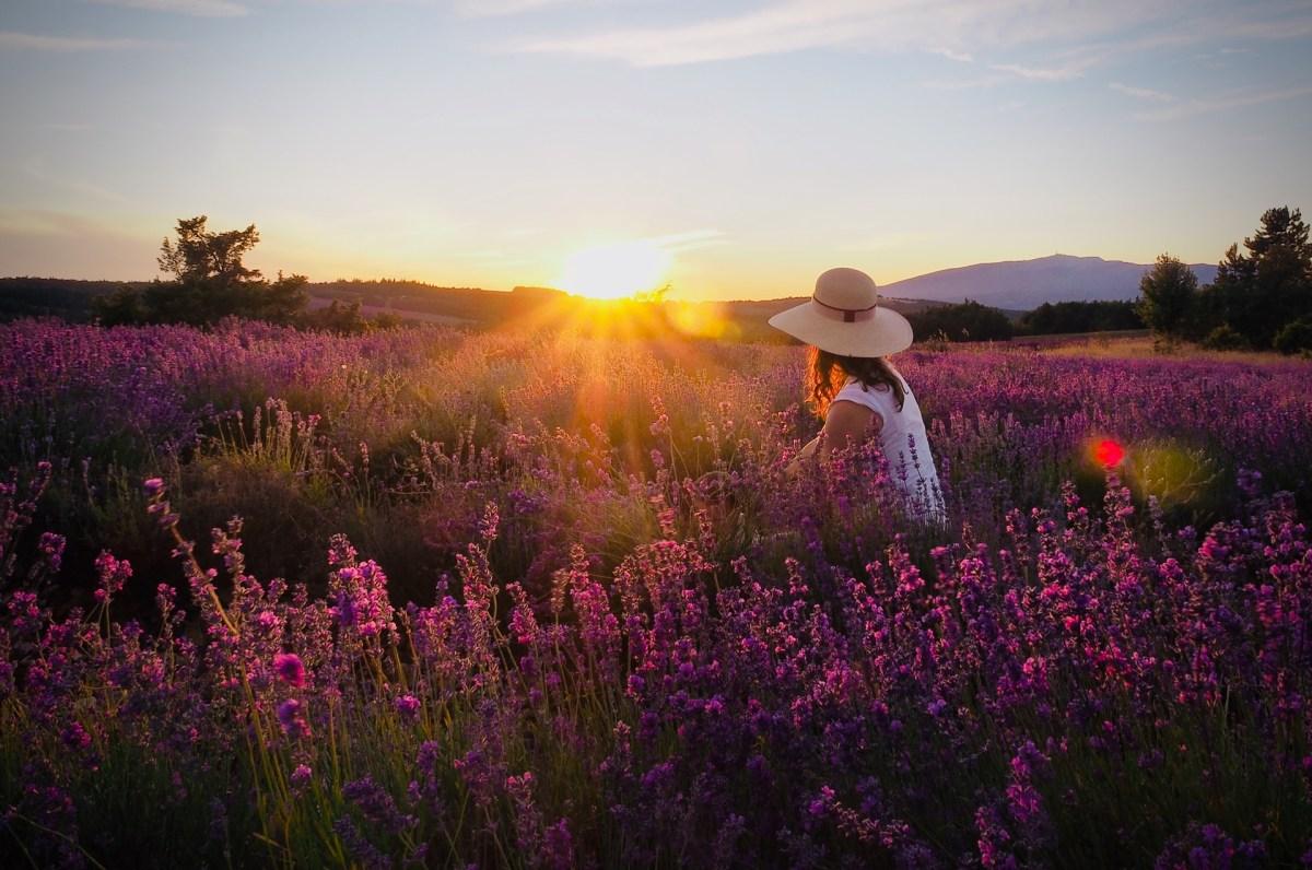 Coucher de soleil avec femme dans un champ de lavande
