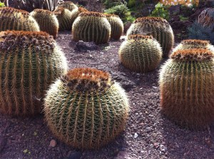 Cactus Plants in Jardin Botanico Canario