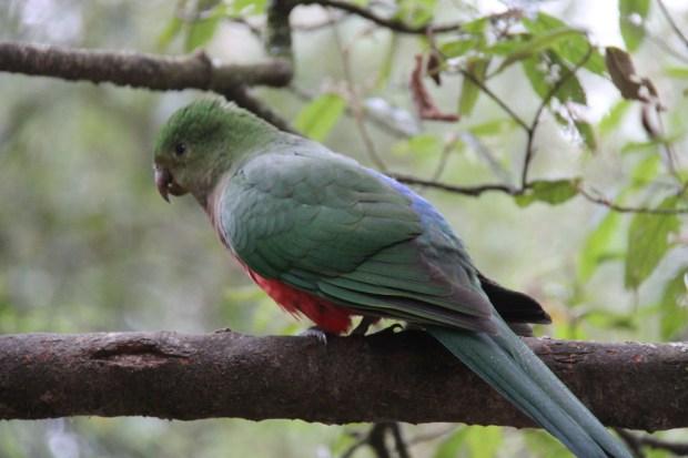 More Sherwood Forest birdlife