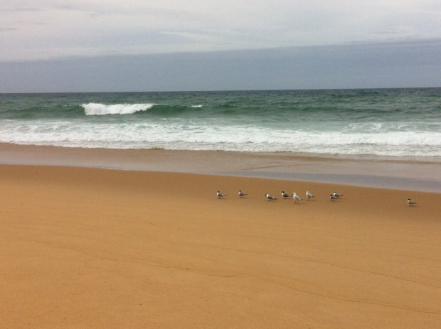 Seagulls at ninety-mile beach, Lakes Entrance
