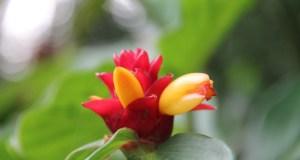 A flower in the Royal Botanic Gardens, Sydney