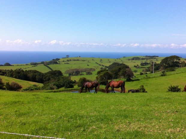 Countryside outside Kiama, Australia