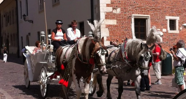 Horses and a carriage, Krakow Old Town