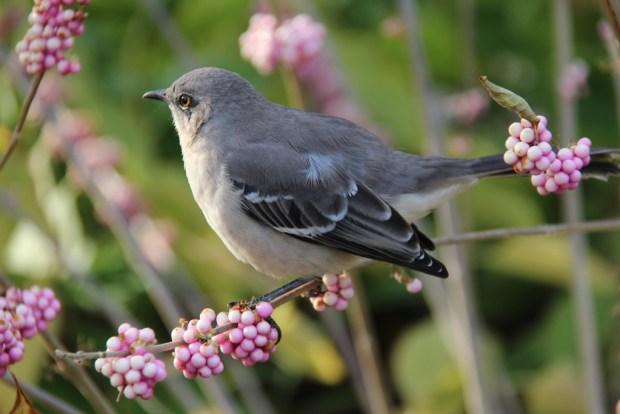 A Bird in US Botanic Garden, Capitol Hill walk