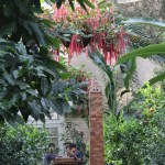 US Botanic Garden, Washington DC