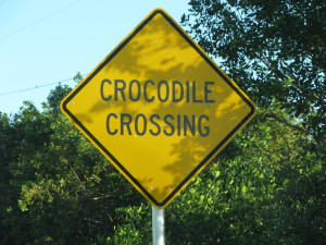 Crododiles crossing, Florida Keys