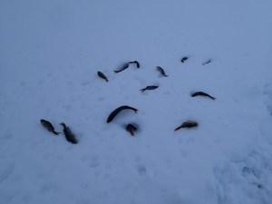 Winter fishing in Luirojärvi