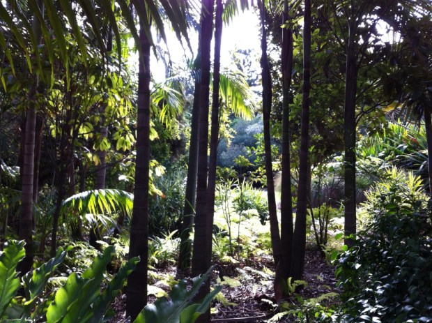 Rainforest gully in the Royal Botanic Gardens of Melbourne