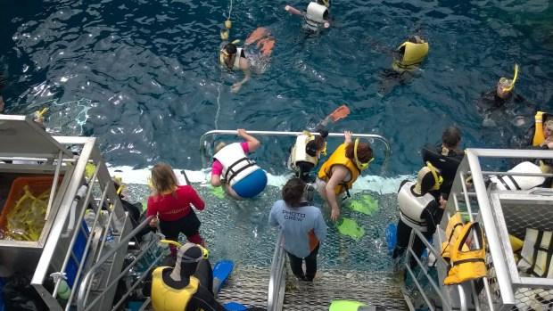 Aguincourt ribbon reefs snorkeling
