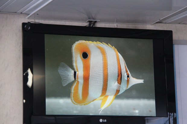Quicksilver Cruises fish on screen