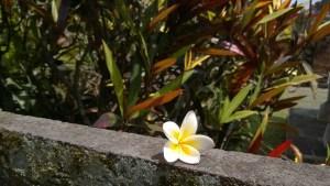 A Bali flower