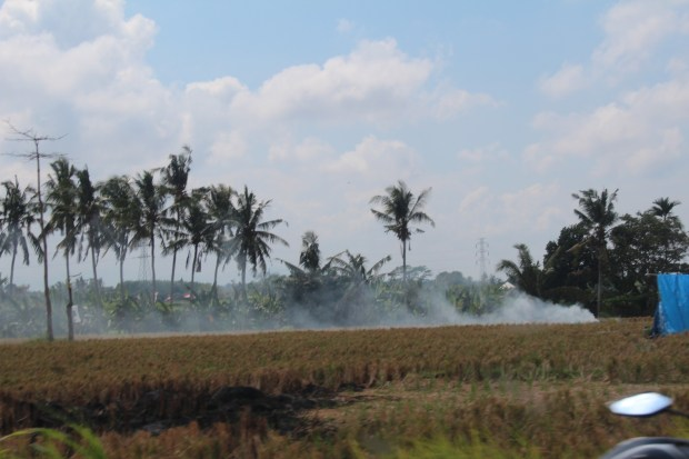 Batuan countryside, drive in Central Bali