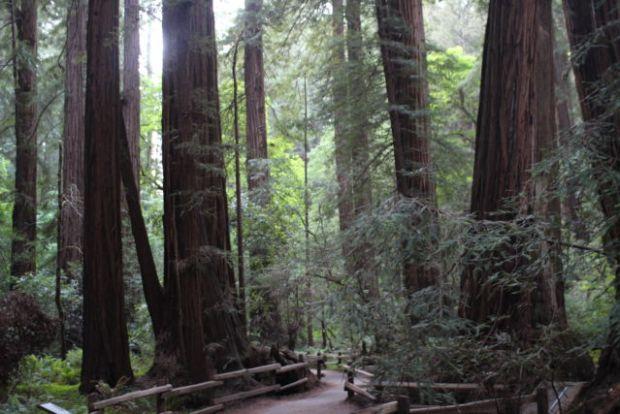 Muir Woods Redwood Creek Trail