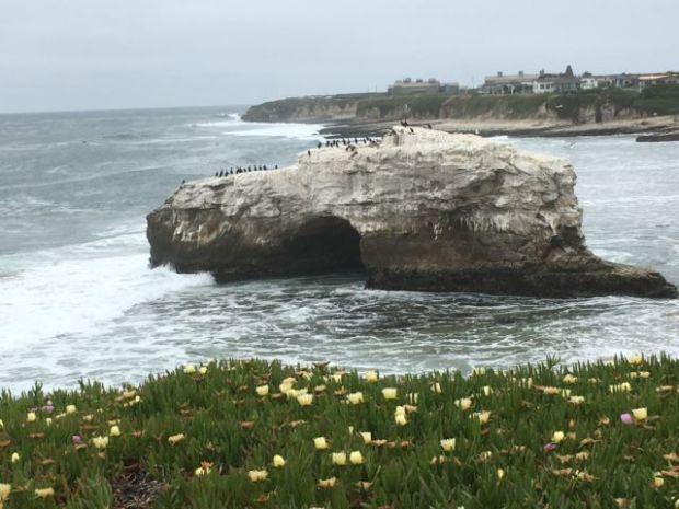 San Francisco to Monterey: Natural Bridges State Park