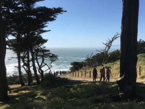 Point Lobos walking track