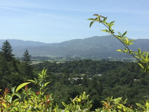 Rutherford Hill Winery view