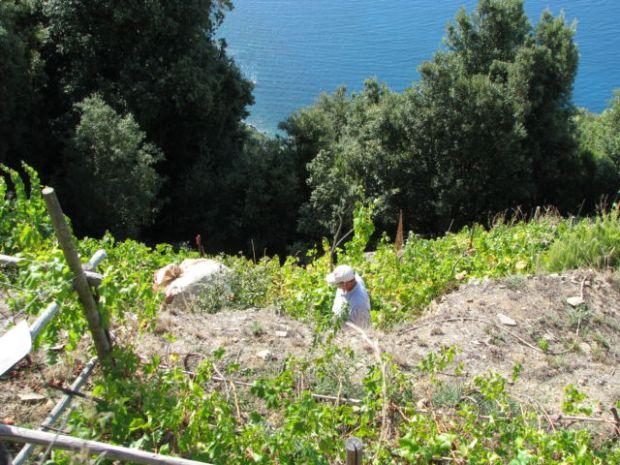 Hiking Cinque Terre Trails, a local farmer