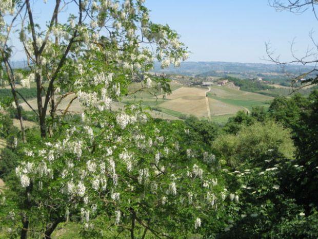 Tuscany Scenic Drive view