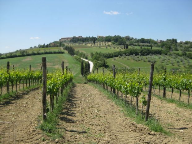 Tuscany scenic drive, Val d'Orcia vineyards