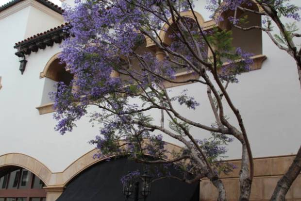 Santa Barbara in one day, Spanish building and jacaranda