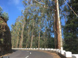 Curral das Freiras road