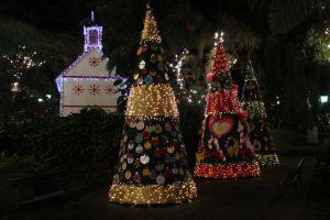 Funchal Christmas trees