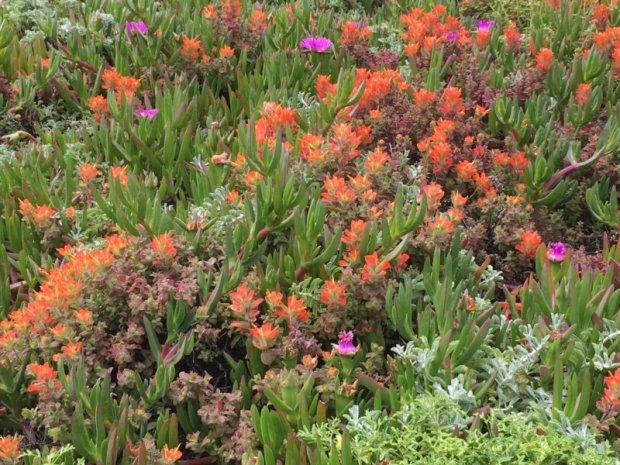 San Francisco to Monterey: Californian flowers