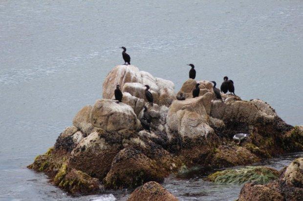 Waterbirds on the rocks