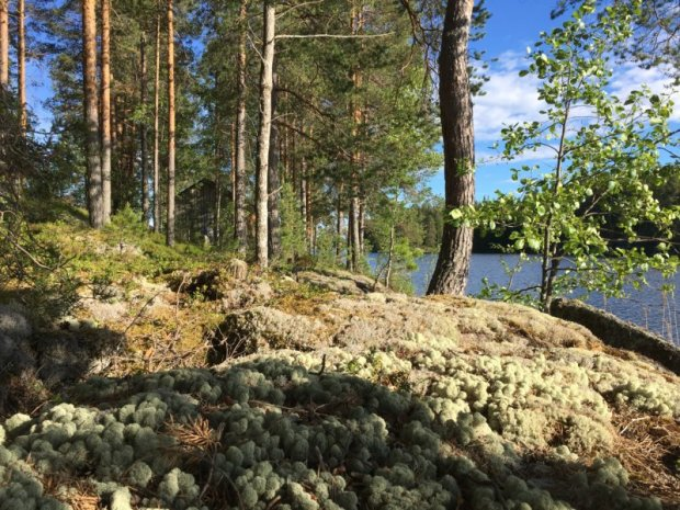 Majaniemi cottage surroundings