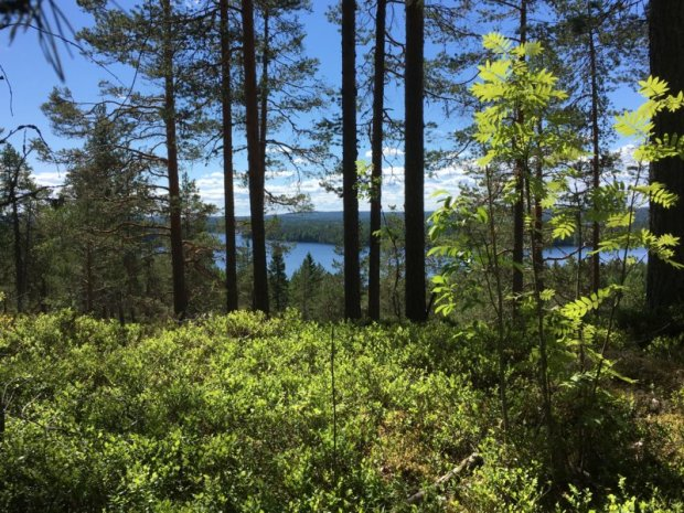 Southern Konnevesi National Park, Loukkuvuori view