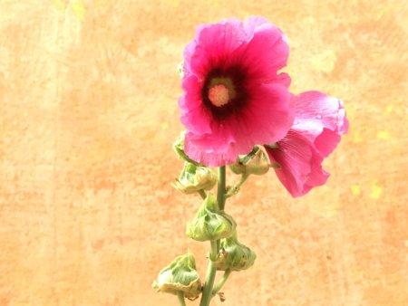 A Danish flower
