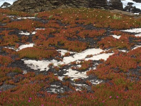 17 Mile Drive shoreline vegetation