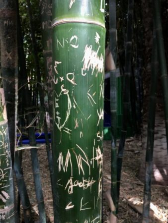 Majorelle Gardens bamboo