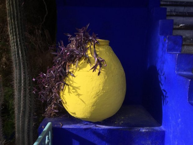 Majorelle Gardens yellow flower pot